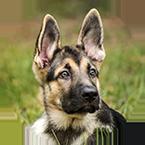 kontakt-dogparacord